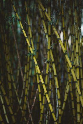 bamboe snoeien stokken