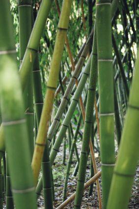 bamboe verwijderen